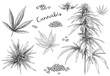Cannabis hand drawn. Hemp seeds, leaf sketch and cannabis plant vector illustration set. Collection of elegant monochrome botanical drawings of marijuana foliage and flower buds in vintage style.