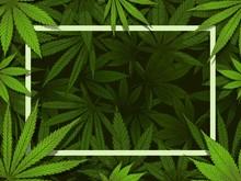 Green Hemp Frame. Marijuana Leafs Border, Medical Drugs And Cannabis Decoration Vector Illustration Background. Rectangular Backdrop Decorated By Foliage Of Wild Medicinal Plant, Ganja Vegetation.