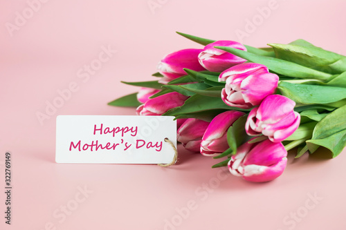 Fotografie, Obraz Pink Tulip flower on pink background with copy space for text