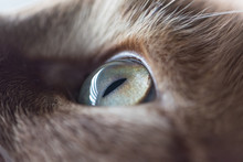 Close Up Of A Left Cat Eye, Ca...