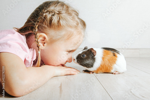 Obraz girl holding a guinea pig in her arms, on a black background. a lot of joy and fun - fototapety do salonu