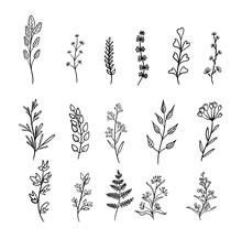 Plant Drawings Of Blooming Wil...