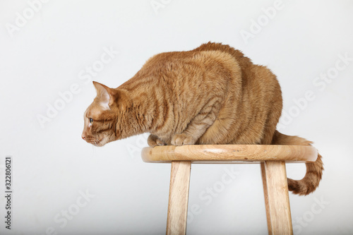 profile of orange tabby cat sitting on wood bar stool on solid background