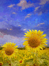 Beautiful Summer Time In Blooming Sunflower Field In The Evening Colorful Sky.- Oil Painting