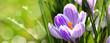 Blumen 1013