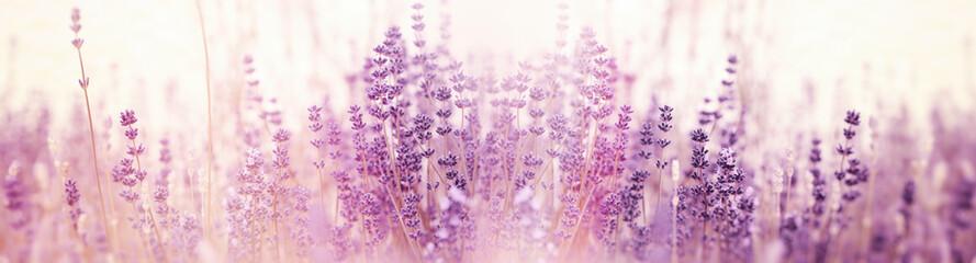 Cvijet lavande, selektivan i mekan fokus na cvjetovima lavande