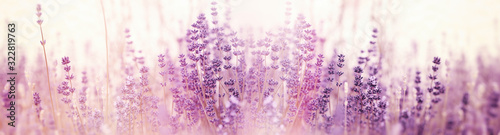 Photo Lavender flower, selective and soft focus on lavender flowers