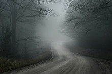 An Empty Dirt Road Through The Old Trees In A Strong Morning Fog. Forest In The Background. Country Landscape. Latvia