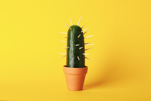 Cactus Cucumber In Pot On Yellow Background, Space For Text