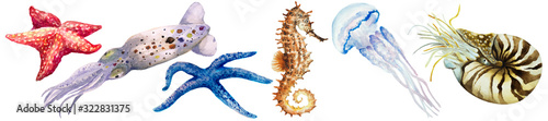 Set of squid, colorful starfish, jellyfish, nautilus mollusk (Nautilus pompillius) and seahorse on a white background, hand drawn watercolor Canvas-taulu