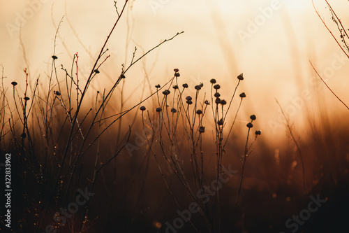 Obraz dry orange grass at sunset - fototapety do salonu