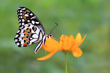 Butterfly On A Flower, Indonesia