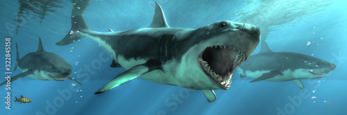 Three great white sharks swim towards you out of the depths Wallpaper Mural