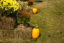Autumn Farm Display Of Agricultural Produce And Fall Chrysanthemum.