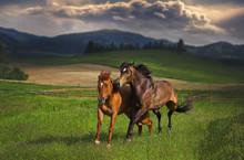 Horses Running Storm