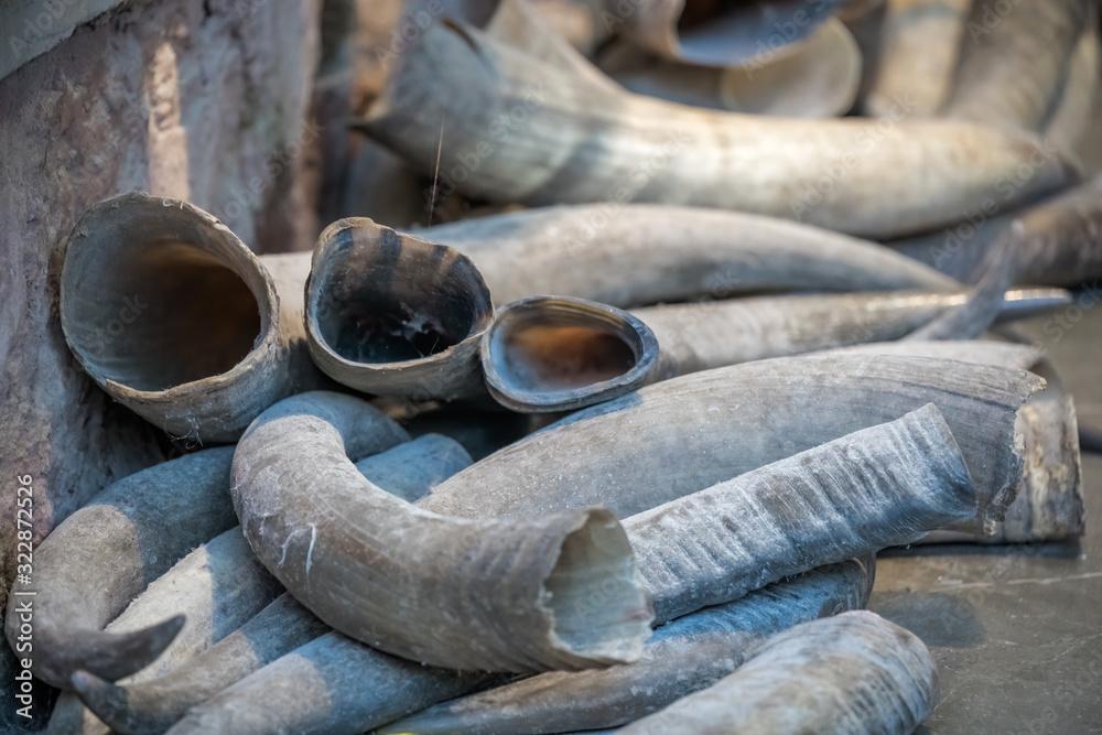 Fototapeta Tusks for sale in Old Town market in Feng Huang
