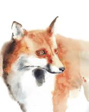 Fox Head Portrait Painting Wat...
