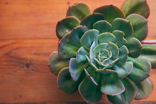 Top View Of Symmetrical Echeverias Succulent Plant Rosette In Timber Flat Lay With Space For Text