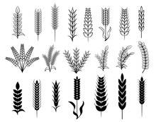 Wheat Vector Set Collection Cl...
