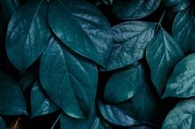 Beautiful Green Leaves Backgro...