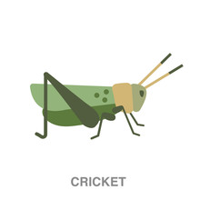 Cricket Flat Icon On White Transparent Background. You Can Be Used Black Ant Icon For Several Purposes.
