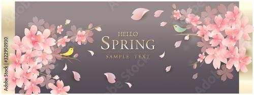 Obraz 春の花 桜 spring cherry blossom background - fototapety do salonu