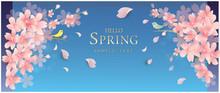 春の花 桜 spring Cherr...