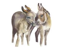Cute Donkeys.watercolor Illust...