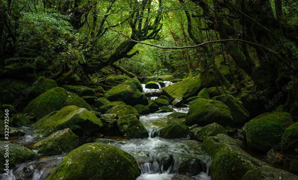 Fototapeta 苔むす屋久島 世界遺産屋久島の風景