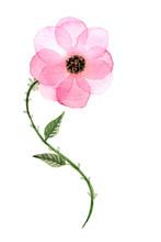 Sfondo Con Delicato Fiore Rosa...
