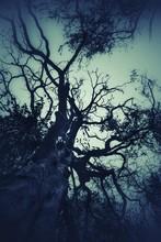 Sky Behind The Tree
