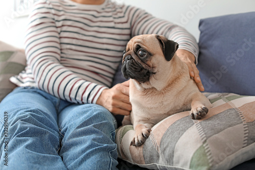 Obraz Handsome man with cute pug dog at home - fototapety do salonu