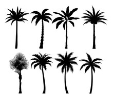 Palm Trees Silhouettes Vector Illustrations Set. Exotic Plants Black Simple Isolated Design Elements Pack. Leaves And Trunks Shapes Collection On White Background. Tropical Coconut Palms.