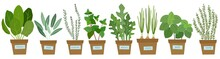 Set Of Potted Herbs. Vector Il...
