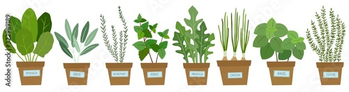 Fotografia Set of potted herbs. Vector illustration.