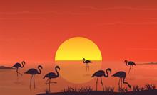 Flamingo Silhouette At Sunset ...