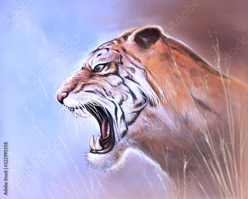 Photo A tiger roared in the meadow