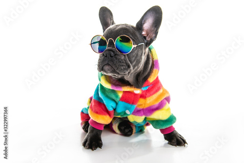 Fototapeta Black French bulldog puppy over a white background with funny glasses obraz