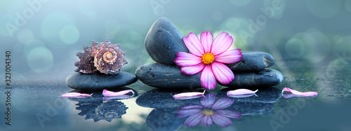 Fototapeta Pink orchid flower and spa stones with water drops isolated . obraz