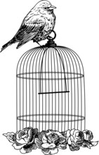 Birds With Cage And Flowers