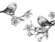 Birds With Nest On A Branch