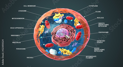 Labeled Eukaryotic cell, nucleus and organelles and plasma membrane - 3d illustration