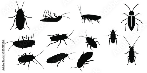 Fototapeta Cockroach insect icons set on white background