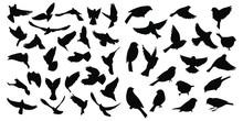 Birds Icons Set Vector Illustration White Background