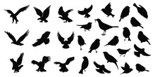 Birds Icons Set Vector Illustration White Background