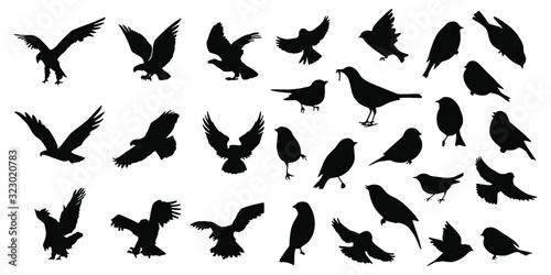 Fototapeta Birds icons set Vector illustration white background obraz