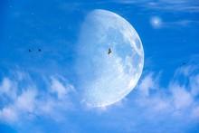 Moon And Birds. Blue Sky.