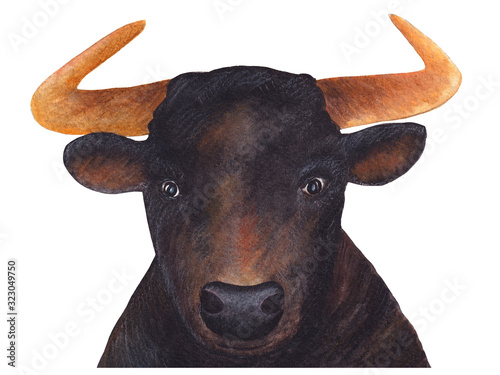 Portrait of a bull Wallpaper Mural