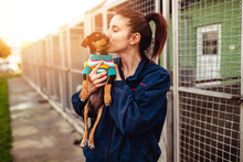 Young Woman In Dog Shelter Ado...
