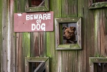 Beware Of Dog Behind The Gate ...